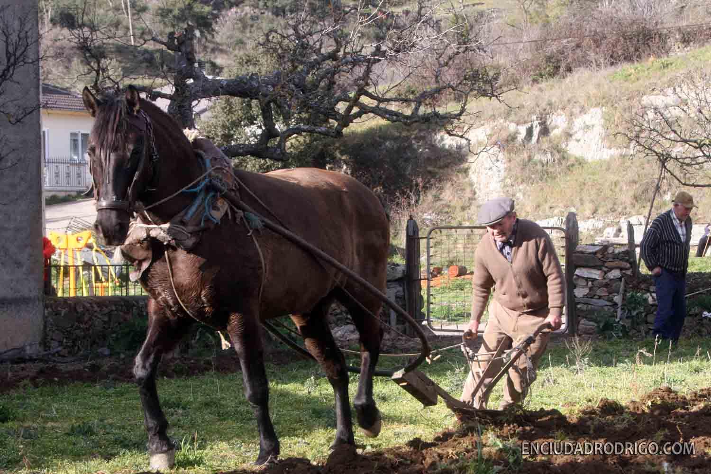 Los huertos de Serradilla con las caballeras y el arado de